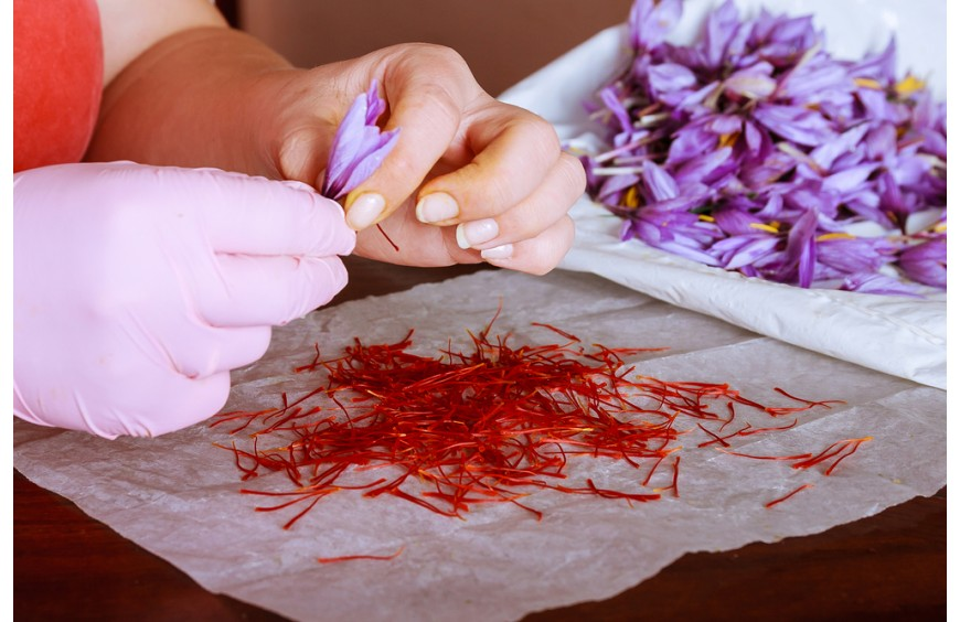 Kashmir saffron now has GI certificate