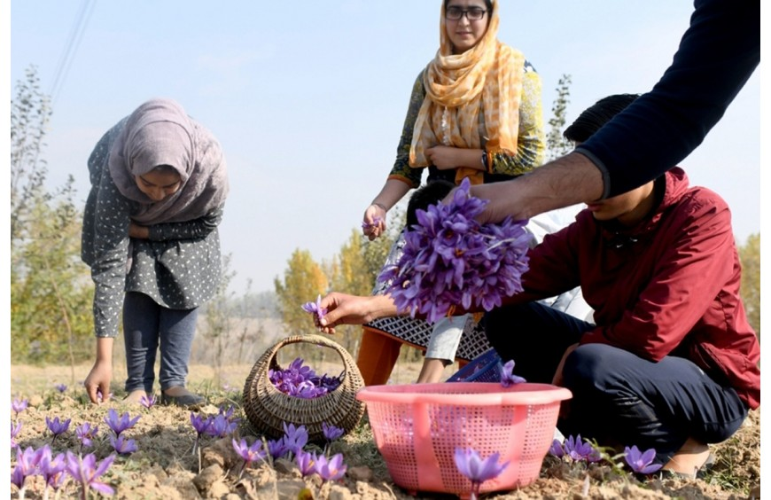 Virtual meet held to export Kashmir saffron to US